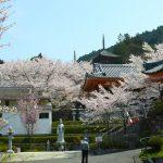 桜の季節、飛鳥を歩く。壺阪寺から岡寺
