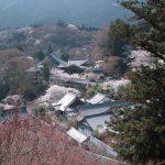 長谷寺に行って来ました。