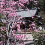 岡寺に行って来ました。