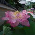 中山寺に行って来ました。
